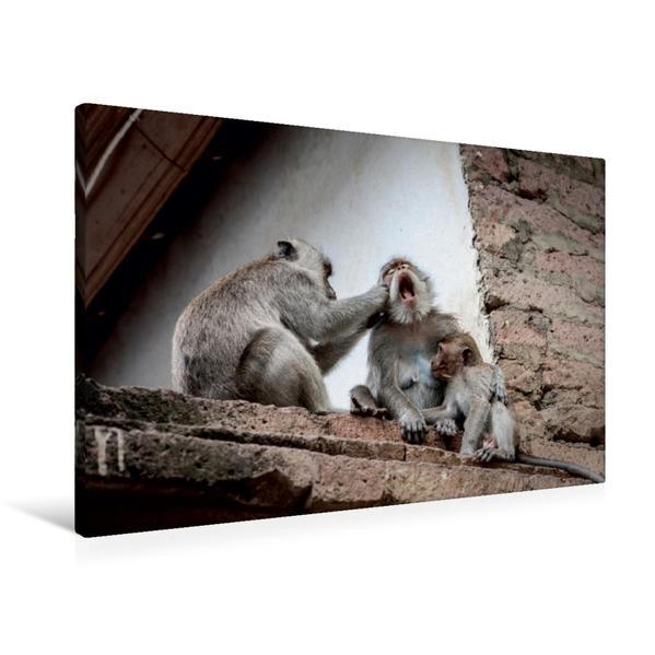 Premium Textil-Leinwand 90 cm x 60 cm quer, Makaken   Wandbild, Bild auf Keilrahmen, Fertigbild auf echter Leinwand, Leinwanddruck - Coverbild