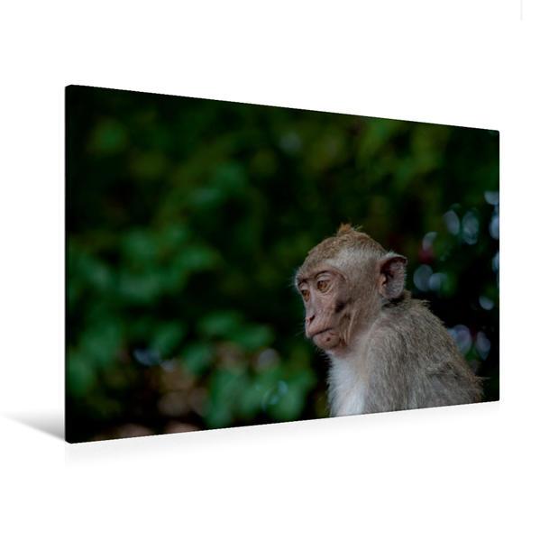 Premium Textil-Leinwand 120 cm x 80 cm quer, Makake | Wandbild, Bild auf Keilrahmen, Fertigbild auf echter Leinwand, Leinwanddruck - Coverbild