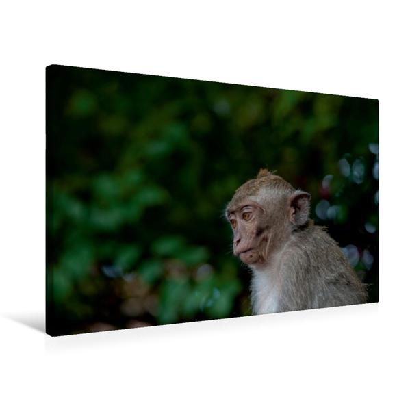 Premium Textil-Leinwand 75 cm x 50 cm quer, Makake | Wandbild, Bild auf Keilrahmen, Fertigbild auf echter Leinwand, Leinwanddruck - Coverbild