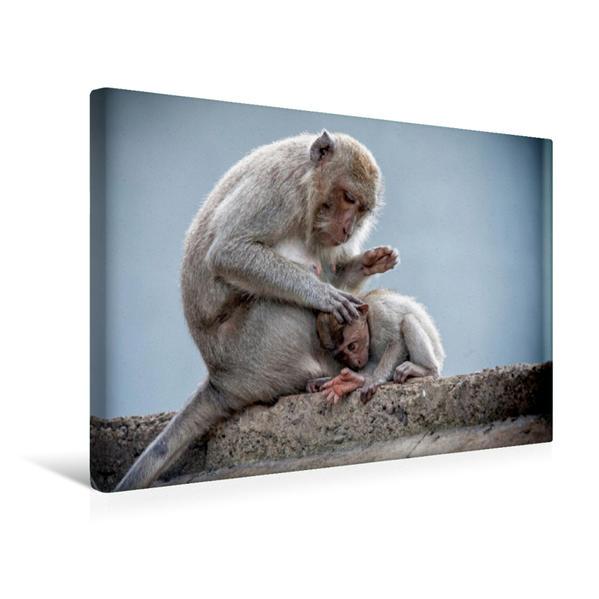 Premium Textil-Leinwand 45 cm x 30 cm quer, Makaken | Wandbild, Bild auf Keilrahmen, Fertigbild auf echter Leinwand, Leinwanddruck - Coverbild