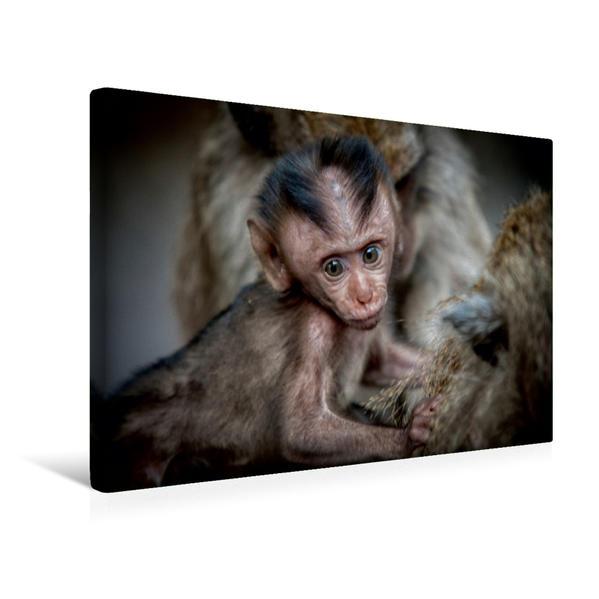 Premium Textil-Leinwand 45 cm x 30 cm quer, Makake | Wandbild, Bild auf Keilrahmen, Fertigbild auf echter Leinwand, Leinwanddruck - Coverbild