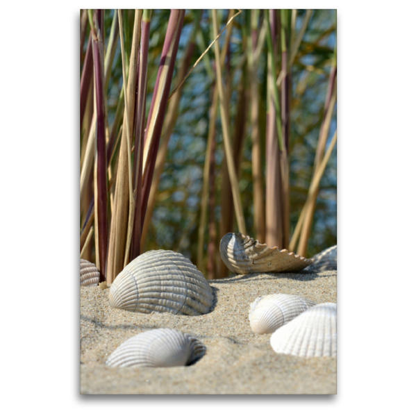 Premium Textil-Leinwand 80 cm x 120 cm  hoch, Muscheln im Dünensand   Wandbild, Bild auf Keilrahmen, Fertigbild auf echter Leinwand, Leinwanddruck - Coverbild