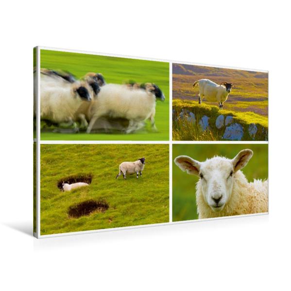 Premium Textil-Leinwand 90 cm x 60 cm quer, Sehnsucht Schottland - In den schottischen Highlands sind Schafe allgegenwärtig | Wandbild, Bild auf Keilrahmen, Fertigbild auf echter Leinwand, Leinwanddruck - Coverbild