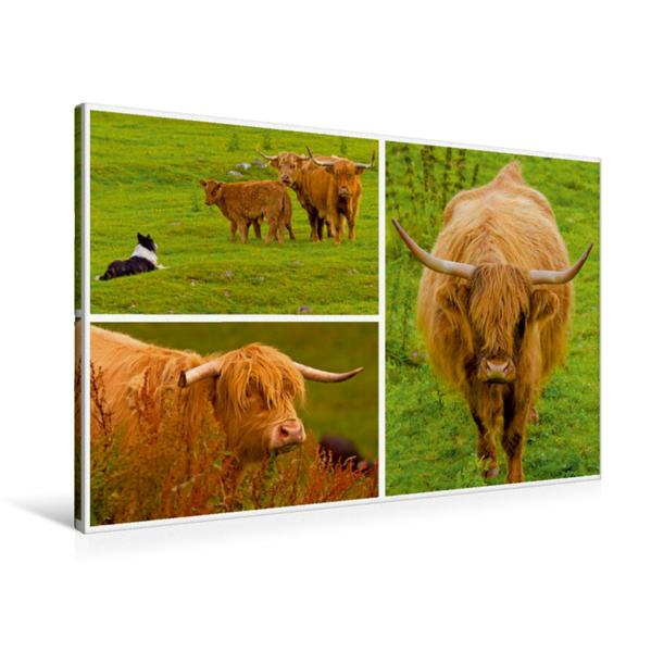 Premium Textil-Leinwand 90 cm x 60 cm quer, Sehnsucht Schottland - Das nach den Highlands benannte unverwechselbare Highland Cattle | Wandbild, Bild auf Keilrahmen, Fertigbild auf echter Leinwand, Leinwanddruck - Coverbild