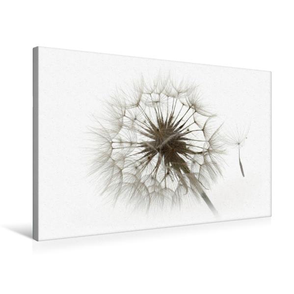 Premium Textil-Leinwand 75 cm x 50 cm quer, Filigrane Pusteblumen | Wandbild, Bild auf Keilrahmen, Fertigbild auf echter Leinwand, Leinwanddruck - Coverbild