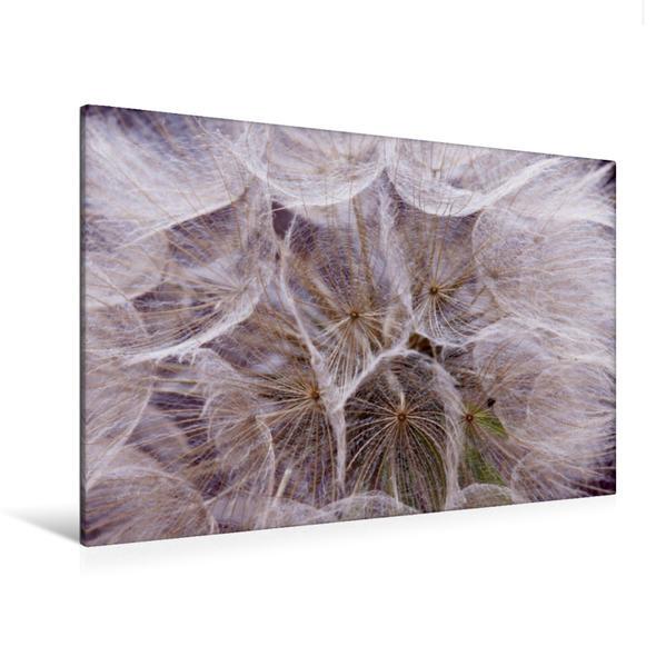 Premium Textil-Leinwand 120 cm x 80 cm quer, Pusteblume ganz nah | Wandbild, Bild auf Keilrahmen, Fertigbild auf echter Leinwand, Leinwanddruck - Coverbild