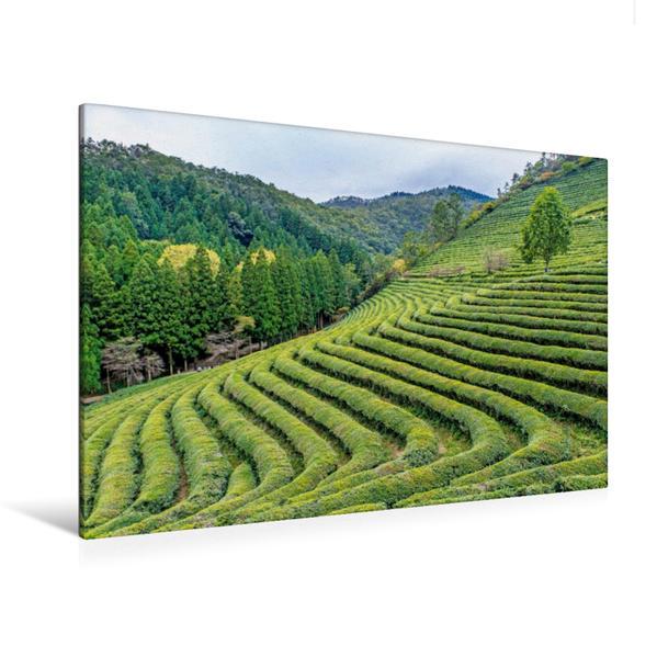 Premium Textil-Leinwand 120 cm x 80 cm quer, Frisches Grün auf den Terassenfeldern einer Teeplantage in der Provinz Jeollanam-do | Wandbild, Bild auf Keilrahmen, Fertigbild auf echter Leinwand, Leinwanddruck - Coverbild