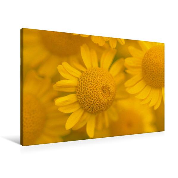 Premium Textil-Leinwand 90 cm x 60 cm quer, Gelbe Mageriten   Wandbild, Bild auf Keilrahmen, Fertigbild auf echter Leinwand, Leinwanddruck - Coverbild