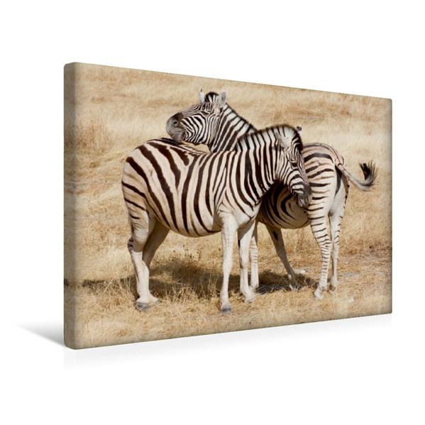 Premium Textil-Leinwand 45 cm x 30 cm quer, Zebras im Etosha-Nationalpark | Wandbild, Bild auf Keilrahmen, Fertigbild auf echter Leinwand, Leinwanddruck - Coverbild