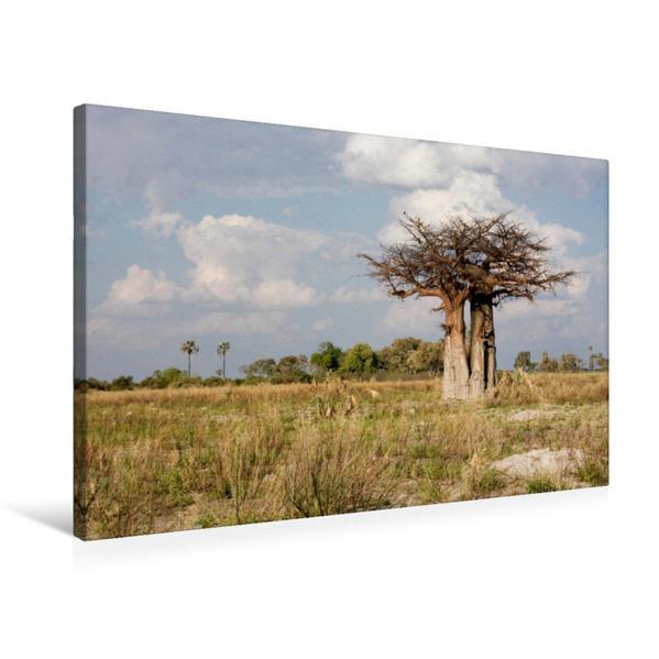 Premium Textil-Leinwand 75 cm x 50 cm quer, Affenbrotbaum in Botswana | Wandbild, Bild auf Keilrahmen, Fertigbild auf echter Leinwand, Leinwanddruck - Coverbild