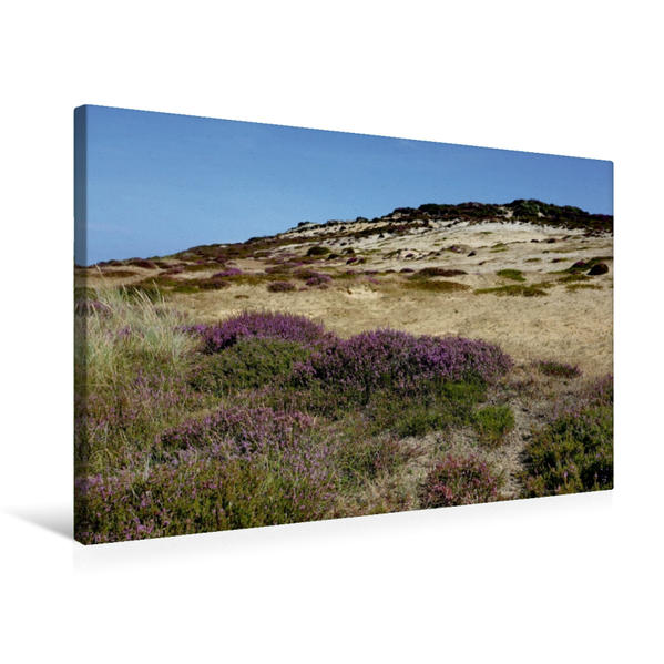 Premium Textil-Leinwand 75 cm x 50 cm quer, Heide am Wanderweg zum Morsum Kliff | Wandbild, Bild auf Keilrahmen, Fertigbild auf echter Leinwand, Leinwanddruck - Coverbild