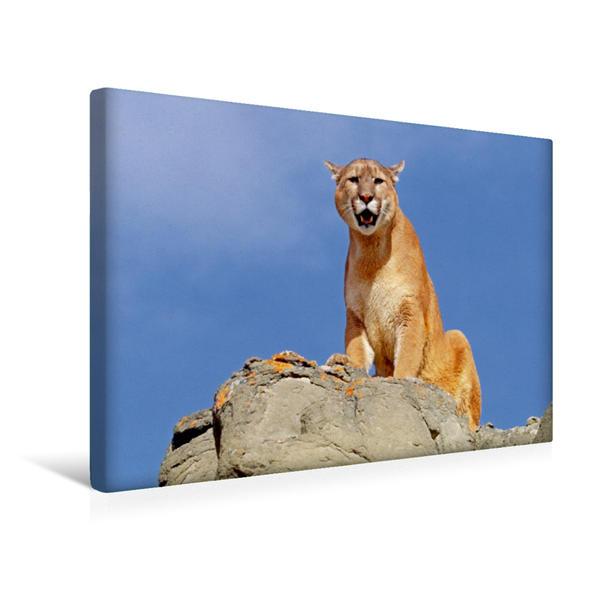 Premium Textil-Leinwand 45 cm x 30 cm quer, Ein stolzer Puma sitzt auf einem Felsen   Wandbild, Bild auf Keilrahmen, Fertigbild auf echter Leinwand, Leinwanddruck - Coverbild