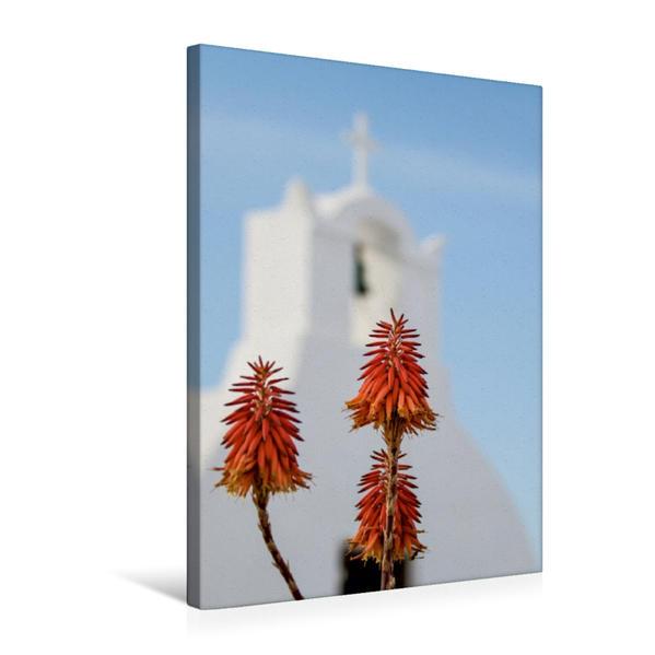 Premium Textil-Leinwand 50 cm x 75 cm hoch, Aloe vera | Wandbild, Bild auf Keilrahmen, Fertigbild auf echter Leinwand, Leinwanddruck - Coverbild