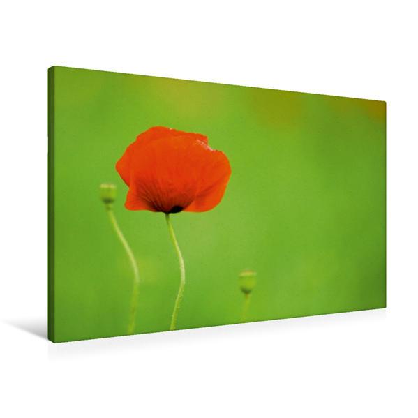 Premium Textil-Leinwand 90 cm x 60 cm quer, Klein und groß | Wandbild, Bild auf Keilrahmen, Fertigbild auf echter Leinwand, Leinwanddruck - Coverbild