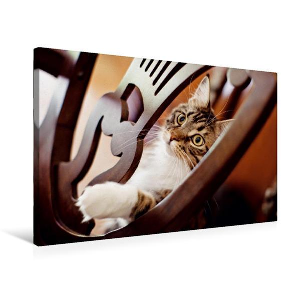 Premium Textil-Leinwand 75 cm x 50 cm quer, Liebevoller Katzenblick | Wandbild, Bild auf Keilrahmen, Fertigbild auf echter Leinwand, Leinwanddruck - Coverbild