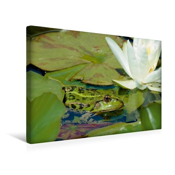 Premium Textil-Leinwand 45 cm x 30 cm quer, Ein Motiv aus dem Kalender FROSCHBUCH | Wandbild, Bild auf Keilrahmen, Fertigbild auf echter Leinwand, Leinwanddruck - Coverbild