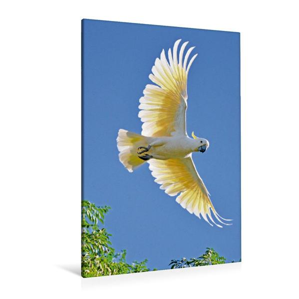 Premium Textil-Leinwand 80 cm x 120 cm  hoch, Ein Gelbhaubenkakadu im eleganten Flug unter wolkenlosem Himmel | Wandbild, Bild auf Keilrahmen, Fertigbild auf echter Leinwand, Leinwanddruck - Coverbild