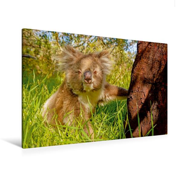 Premium Textil-Leinwand 120 cm x 80 cm quer, Freundlicher Koala sitzt unter einem Baum | Wandbild, Bild auf Keilrahmen, Fertigbild auf echter Leinwand, Leinwanddruck - Coverbild