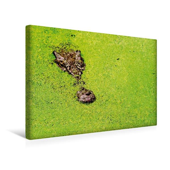 Premium Textil-Leinwand 45 cm x 30 cm quer, Langsam und kaum sichtbar gleitet das Krokodil an der Wasseroberfläche | Wandbild, Bild auf Keilrahmen, Fertigbild auf echter Leinwand, Leinwanddruck - Coverbild