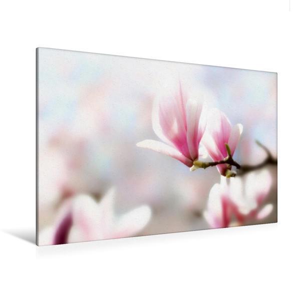Premium Textil-Leinwand 120 cm x 80 cm quer, Wenn die Magnolien blühen ... | Wandbild, Bild auf Keilrahmen, Fertigbild auf echter Leinwand, Leinwanddruck - Coverbild