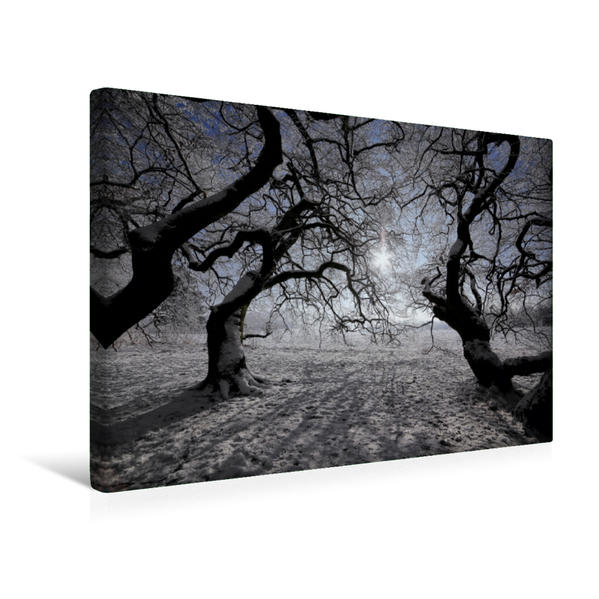 Premium Textil-Leinwand 45 cm x 30 cm quer, nach Süden zur Wintersonne   Wandbild, Bild auf Keilrahmen, Fertigbild auf echter Leinwand, Leinwanddruck - Coverbild