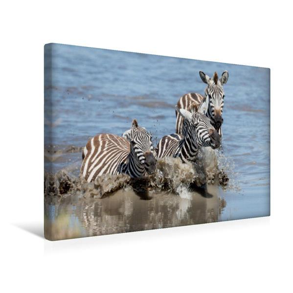 Premium Textil-Leinwand 45 cm x 30 cm quer, Badespaß der Zebras | Wandbild, Bild auf Keilrahmen, Fertigbild auf echter Leinwand, Leinwanddruck - Coverbild