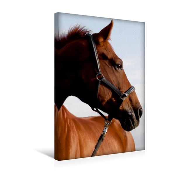 Premium Textil-Leinwand 30 cm x 45 cm hoch, Springpferd | Wandbild, Bild auf Keilrahmen, Fertigbild auf echter Leinwand, Leinwanddruck - Coverbild