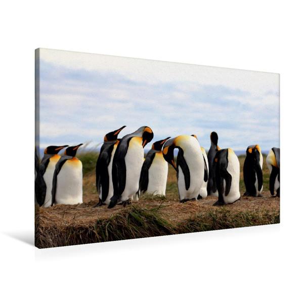 Premium Textil-Leinwand 90 cm x 60 cm quer, Königspinguine, Patagonien, Feuerland, Chile | Wandbild, Bild auf Keilrahmen, Fertigbild auf echter Leinwand, Leinwanddruck - Coverbild