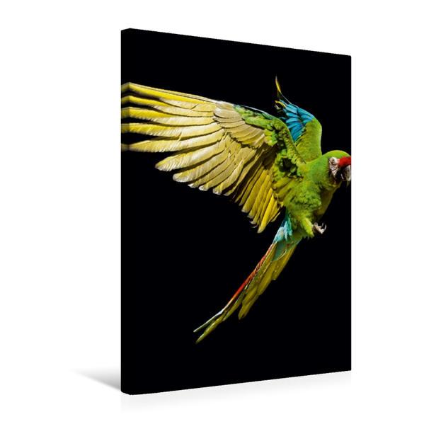 Premium Textil-Leinwand 50 cm x 75 cm hoch, Ein Motiv aus dem Kalender Papageien - farbig und schwarz/weiß | Wandbild, Bild auf Keilrahmen, Fertigbild auf echter Leinwand, Leinwanddruck - Coverbild