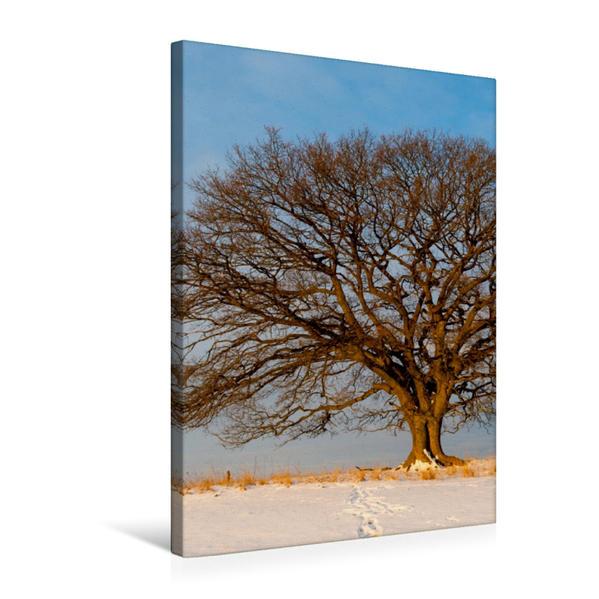 Premium Textil-Leinwand 50 cm x 75 cm hoch, Februar: Noch ist es bitterkalt. Die Morgensonne bringt ein bisschen Wärme. | Wandbild, Bild auf Keilrahmen, Fertigbild auf echter Leinwand, Leinwanddruck - Coverbild