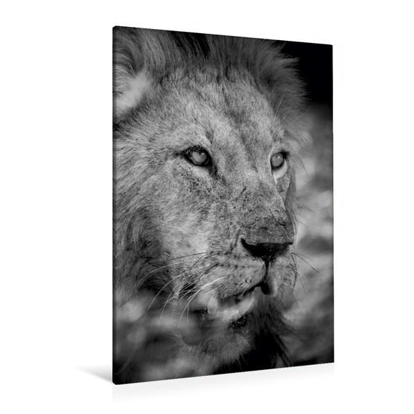 Premium Textil-Leinwand 80 cm x 120 cm  hoch, Ein Motiv aus dem Kalender FineArt in Black and White: Der König der Löwen | Wandbild, Bild auf Keilrahmen, Fertigbild auf echter Leinwand, Leinwanddruck - Coverbild