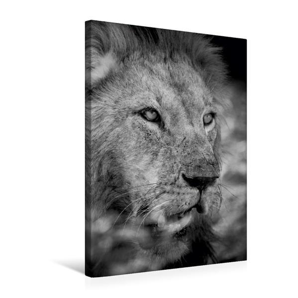 Premium Textil-Leinwand 50 cm x 75 cm hoch, Ein Motiv aus dem Kalender FineArt in Black and White: Der König der Löwen   Wandbild, Bild auf Keilrahmen, Fertigbild auf echter Leinwand, Leinwanddruck - Coverbild