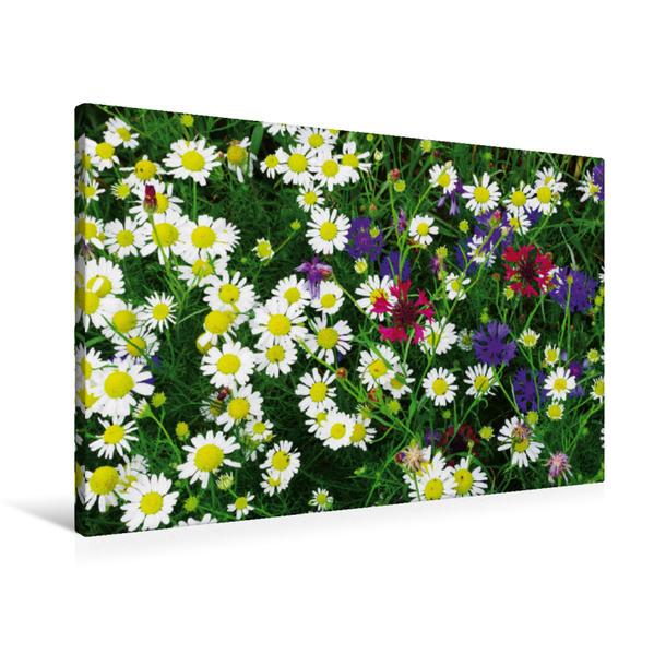 Premium Textil-Leinwand 90 cm x 60 cm quer, Wildkräuter Schönheiten | Wandbild, Bild auf Keilrahmen, Fertigbild auf echter Leinwand, Leinwanddruck - Coverbild