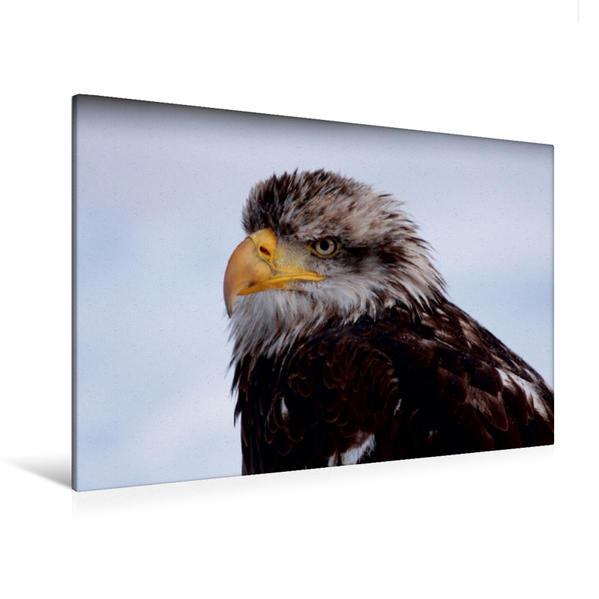 Premium Textil-Leinwand 120 cm x 80 cm quer, Ein Motiv aus dem Kalender Heimische Tiere | Wandbild, Bild auf Keilrahmen, Fertigbild auf echter Leinwand, Leinwanddruck - Coverbild