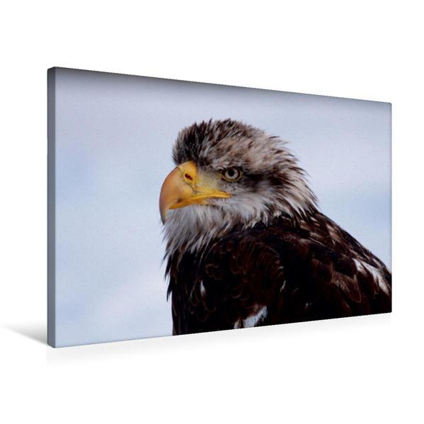 Premium Textil-Leinwand 75 cm x 50 cm quer, Ein Motiv aus dem Kalender Heimische Tiere | Wandbild, Bild auf Keilrahmen, Fertigbild auf echter Leinwand, Leinwanddruck - Coverbild