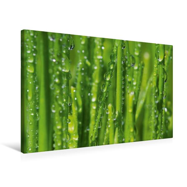 Premium Textil-Leinwand 75 cm x 50 cm quer, Ein Motiv aus dem Kalender Meine kleine grüne Wassertropfen Welt | Wandbild, Bild auf Keilrahmen, Fertigbild auf echter Leinwand, Leinwanddruck - Coverbild