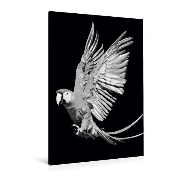 Premium Textil-Leinwand 80 cm x 120 cm  hoch, Hellroter Ara - schwarz/weiß   Wandbild, Bild auf Keilrahmen, Fertigbild auf echter Leinwand, Leinwanddruck - Coverbild