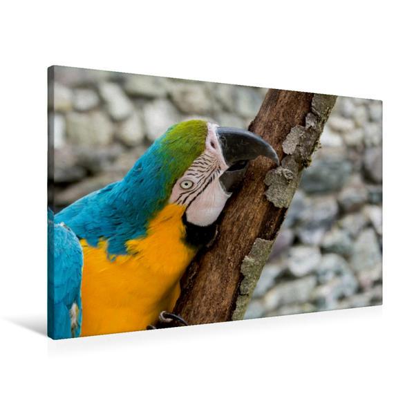 Premium Textil-Leinwand 90 cm x 60 cm quer, Gelbbrustara | Wandbild, Bild auf Keilrahmen, Fertigbild auf echter Leinwand, Leinwanddruck - Coverbild