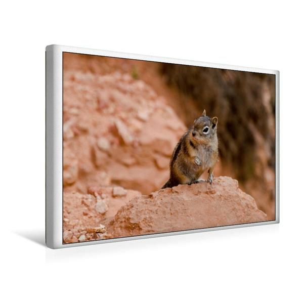 Premium Textil-Leinwand 45 cm x 30 cm quer, Streifenhörnchen im Bryce Canyon (USA) | Wandbild, Bild auf Keilrahmen, Fertigbild auf echter Leinwand, Leinwanddruck - Coverbild
