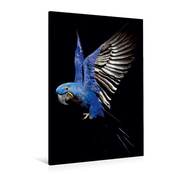 Premium Textil-Leinwand 80 cm x 120 cm  hoch, Hyazinth-Ara - farbig | Wandbild, Bild auf Keilrahmen, Fertigbild auf echter Leinwand, Leinwanddruck - Coverbild