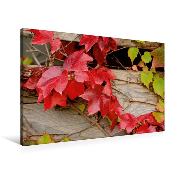 Premium Textil-Leinwand 90 cm x 60 cm quer, Rotes Herbstlaub | Wandbild, Bild auf Keilrahmen, Fertigbild auf echter Leinwand, Leinwanddruck - Coverbild
