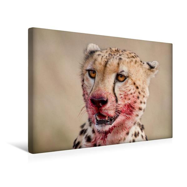 Premium Textil-Leinwand 45 cm x 30 cm quer, Mit blutverschmiertem Gesicht sieht der Gepard zu den Hyänen hin. | Wandbild, Bild auf Keilrahmen, Fertigbild auf echter Leinwand, Leinwanddruck - Coverbild