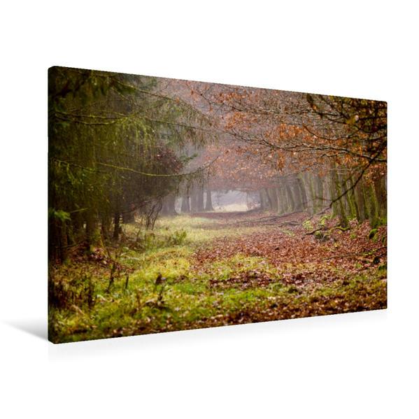 Premium Textil-Leinwand 90 cm x 60 cm quer, Ein Motiv aus dem Kalender Spaziergang durch Wald und Feld | Wandbild, Bild auf Keilrahmen, Fertigbild auf echter Leinwand, Leinwanddruck - Coverbild