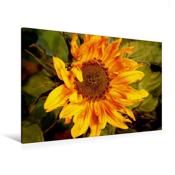 Premium Textil-Leinwand 120 cm x 80 cm quer, Wilde Sonnenblume | Wandbild, Bild auf Keilrahmen, Fertigbild auf echter Leinwand, Leinwanddruck - Coverbild