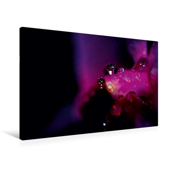 Premium Textil-Leinwand 90 cm x 60 cm quer, Violetter Morgentau   Wandbild, Bild auf Keilrahmen, Fertigbild auf echter Leinwand, Leinwanddruck - Coverbild