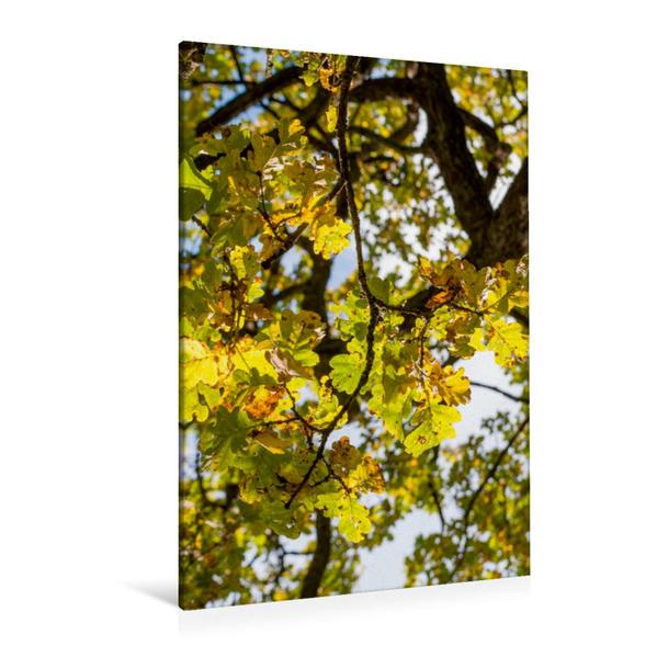 Premium Textil-Leinwand 80 cm x 120 cm  hoch, Oktober: Der Herbst schickt seine goldene Farbe durch die gelben Blätter. | Wandbild, Bild auf Keilrahmen, Fertigbild auf echter Leinwand, Leinwanddruck - Coverbild
