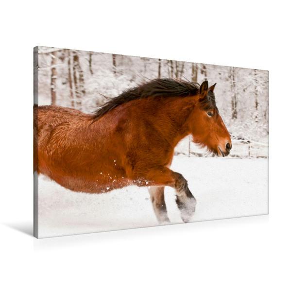 Premium Textil-Leinwand 90 cm x 60 cm quer, Pferde-Power | Wandbild, Bild auf Keilrahmen, Fertigbild auf echter Leinwand, Leinwanddruck - Coverbild