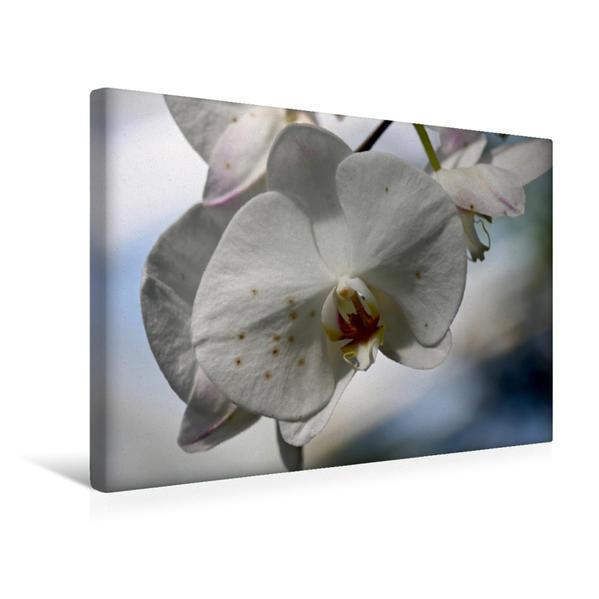 Premium Textil-Leinwand 45 cm x 30 cm quer, Ein Motiv aus dem Kalender Zauberhafte Orchideen | Wandbild, Bild auf Keilrahmen, Fertigbild auf echter Leinwand, Leinwanddruck - Coverbild