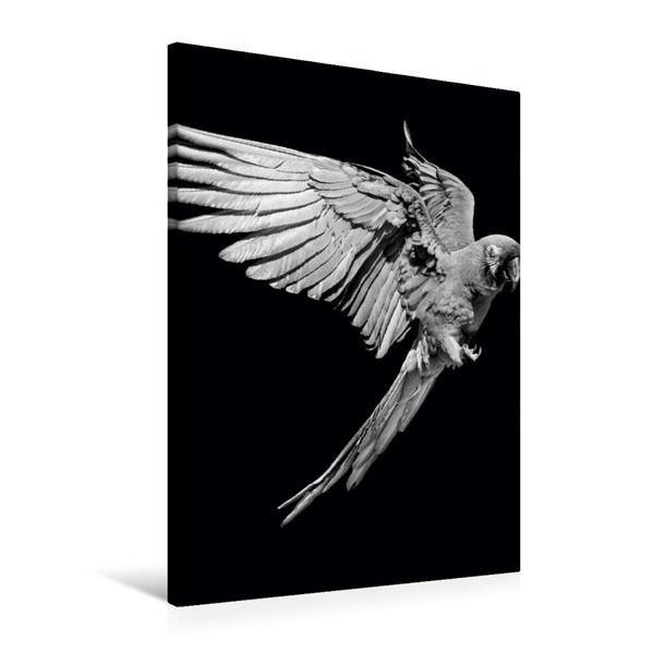 Premium Textil-Leinwand 60 cm x 90 cm hoch, Ein Motiv aus dem Kalender Papageien - farbig und schwarz/weiß   Wandbild, Bild auf Keilrahmen, Fertigbild auf echter Leinwand, Leinwanddruck - Coverbild