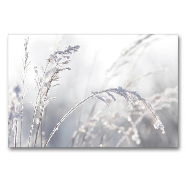 Premium Textil-Leinwand 90 cm x 60 cm quer, Wintergräser | Wandbild, Bild auf Keilrahmen, Fertigbild auf echter Leinwand, Leinwanddruck - Coverbild